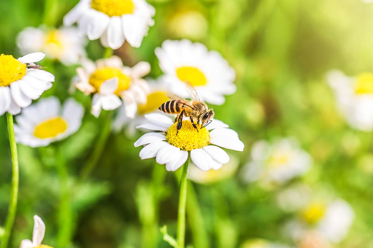 Aktuelles: Blumen für die Bienen