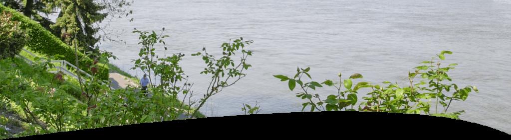 Bild Rhein
